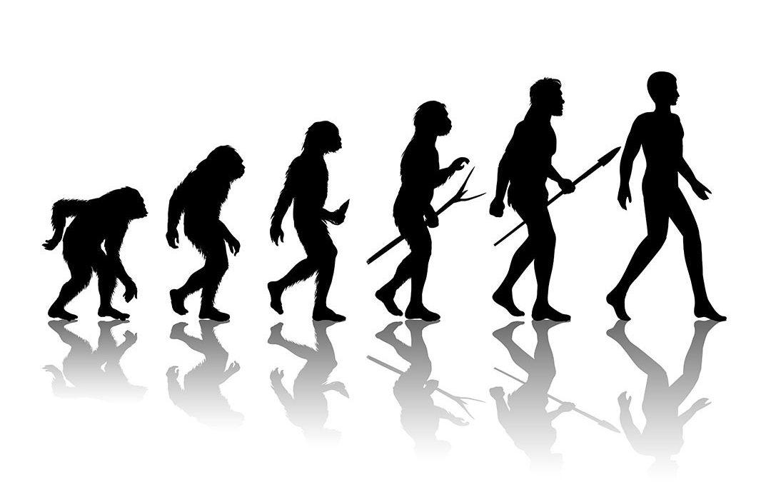 Bachelor of Theology Creation Vs Evolution I